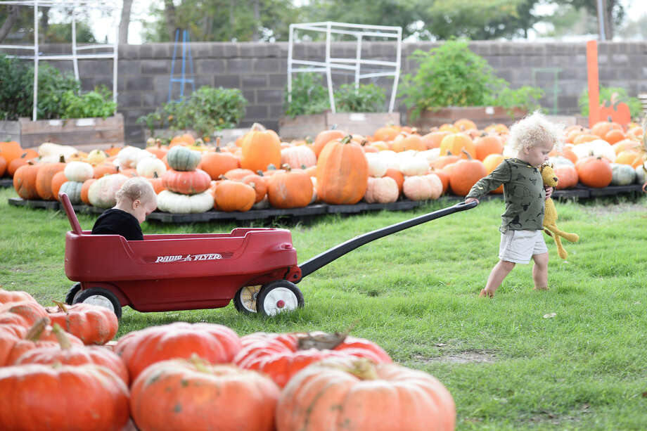 Two-year-old Gunnar pulls his sister Piper in a wagon through the pumpkin patch at St. Luke's United Methodist Church Oct. 6, 2018. James Durbin/Reporter-Telegram Photo: James Durbin / ? 2018 Midland Reporter-Telegram. All Rights Reserved.