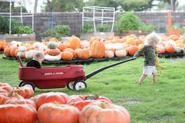 Two-year-old Gunnar pulls his sister Piper in a wagon through the pumpkin patch at St. Luke's United Methodist Church Oct. 6, 2018. James Durbin/Reporter-Telegram