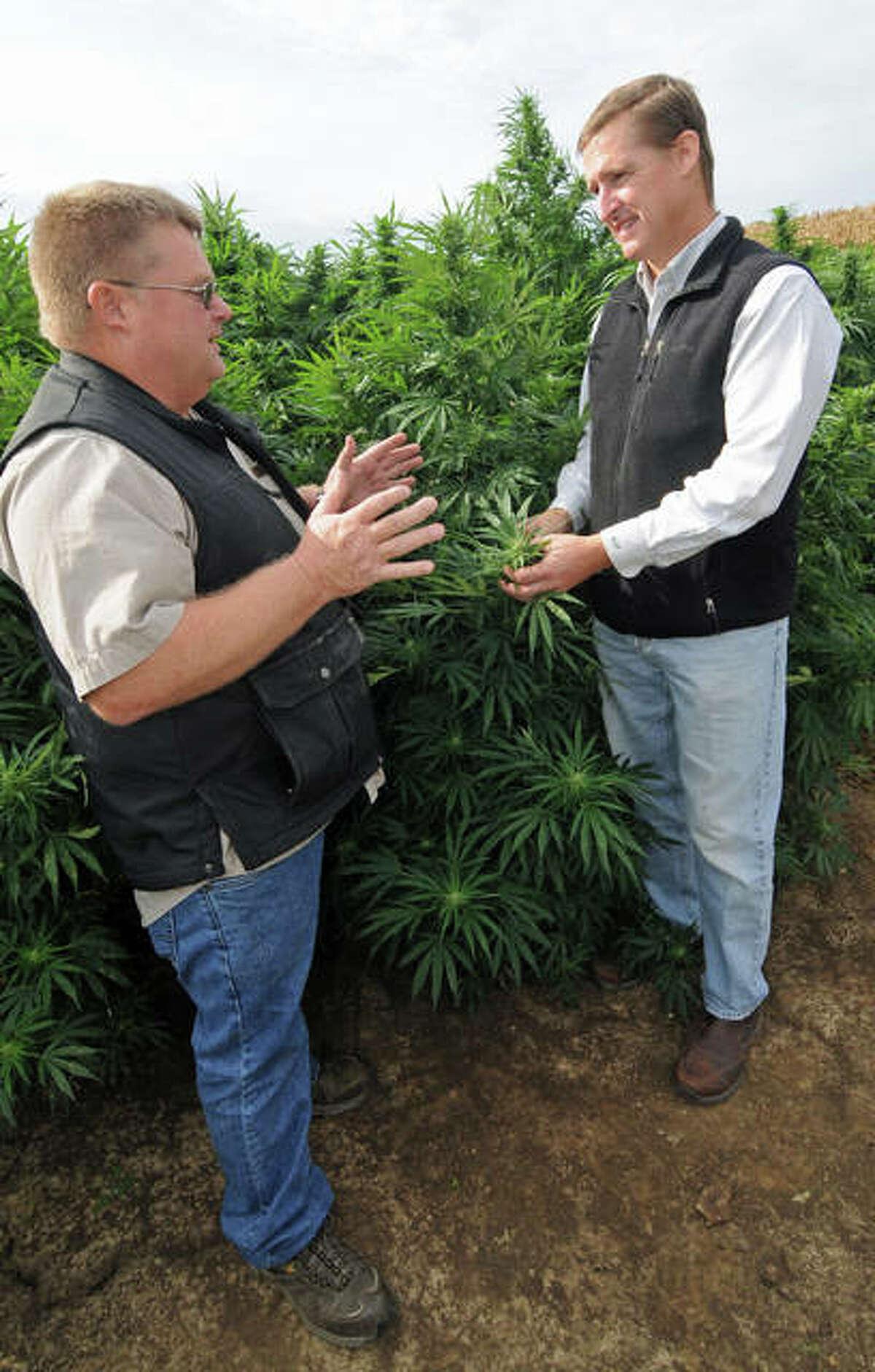 Warren County farmer Andy Huston, left, discusses the progress of his industrial hemp crop with Western Illinois University School of Agriculture Professor Win Phippen.