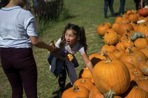 A young girl gasps at a mini pumpkin she found at the Good News Pumpkin Patch, Saturday, Oct. 6, 2018.
