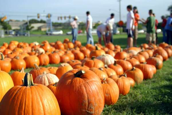 The Oxford United Methodist Church has at least 3,000 pumpkins at its pumpkin patch.