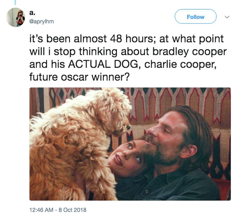 "Hollywood actor Bradley Cooper's dog, Charlie, is winning over moviegoers in the new film ""A Star Is Born."" Photo: Twitter Screen Grab"