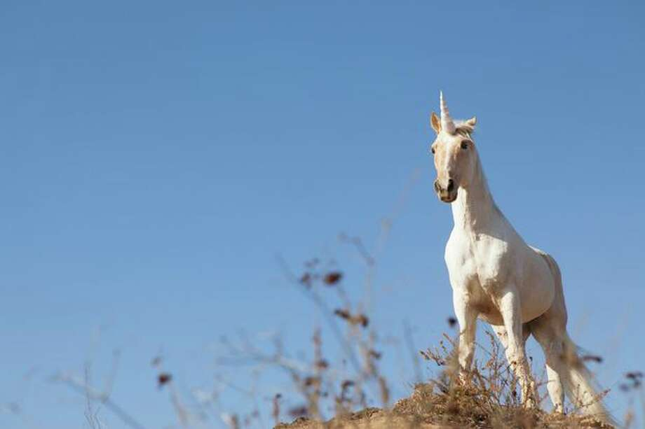 FILE PHOTO: A unicorn. Photo: Lucy Von Held / Getty