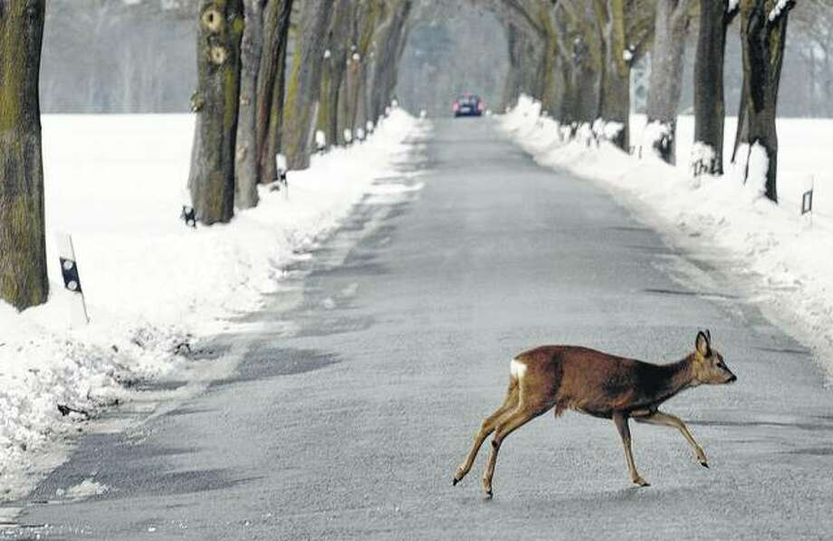 A deer crosses a snow-covered road. This is the time of year when motorists in Illinois are more likely to encounter deer on the road, and thousands of those meetings are expected to end in crashes. Photo: Theo Heimann | AFP (Getty Images)