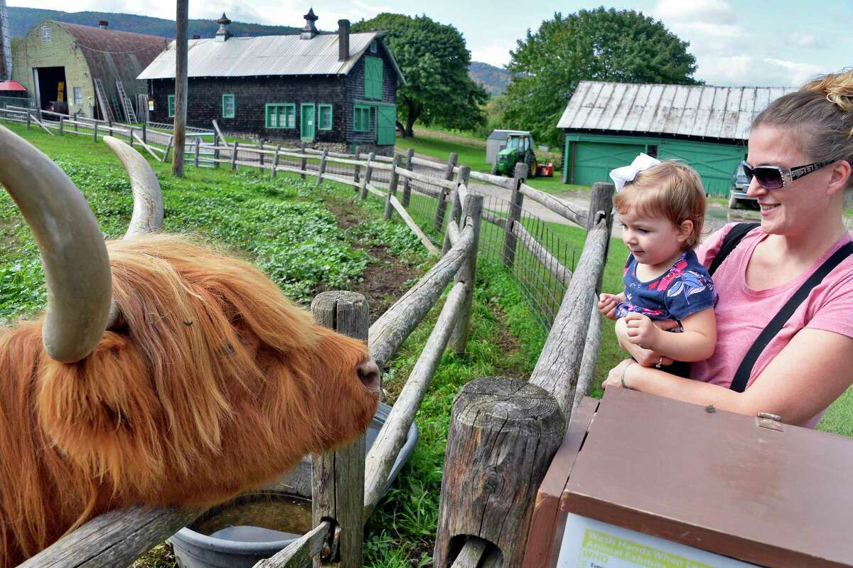 Jennifer Foster of Delmar and her 2-year-old daughter Alyssa get a close-up look at Rosie, the Scotch Highland Cow, at Indian Ladder Farms Tuesday Oct. 9, 2018 in Altamont, NY. (John Carl D'Annibale/Times Union)