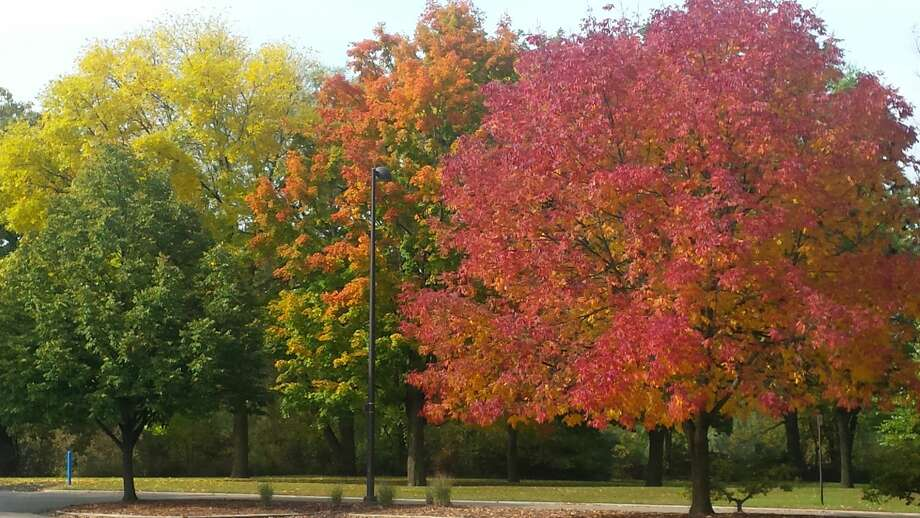 Midland's fabulous fall foliage Photo: Fred Kelly/fred.kelly@mdn.net