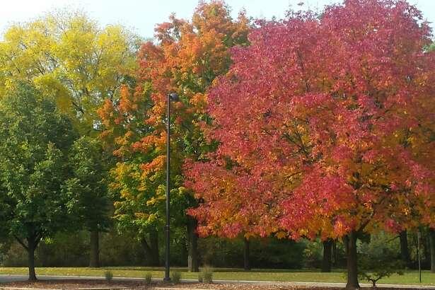 Midland's fabulous fall foliage