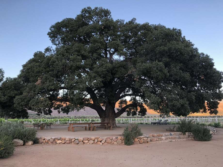 California couple to pay nearly $600,000 for uprooting tree
