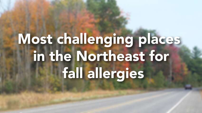 The Asthma and Allergy Foundation of America's 2018 Fall Allergy Capitals annual ranking studied the 100 most-populated Metropolitan Statistical Areas in the contiguous 48 United States and analyzed seasonal pollen score, medication use and number of allergy specialists. While scores for individual categories are not weighted equally, they are calculated into a composite score to rank each city from highest total score to lowest. The national average score was 44.58, while the Northeast average was almost 12 points higher at 56.48. Click through the slideshow to see where Connecticut cities ranked in the Northeast as fall allergy capitals.