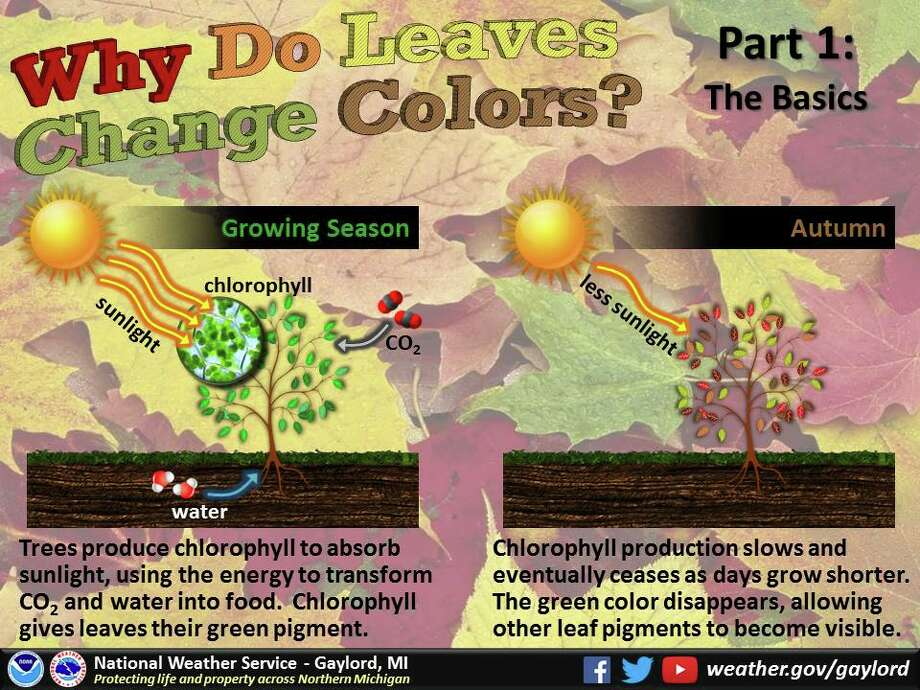Autumn in Michigan boasts spectacular fall foliage. Ever wonder what brings about the change in leaf color and why they drop this time of year? The National Weather Service in Gaylord put together this slide show of some of the science behind the phenomena. Photo: National Weather Service Gaylord