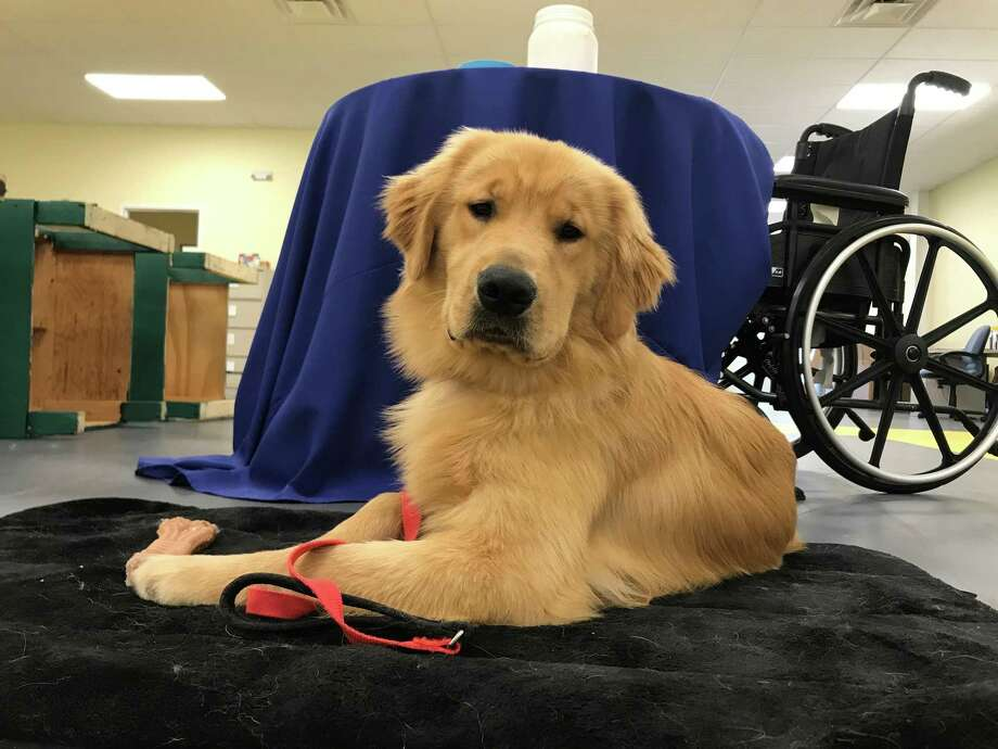 Educated Canines Assisting with Disabilities in Winsted is hold a dog training weekend, Oct. 19-21. Photo: Contributed Photo