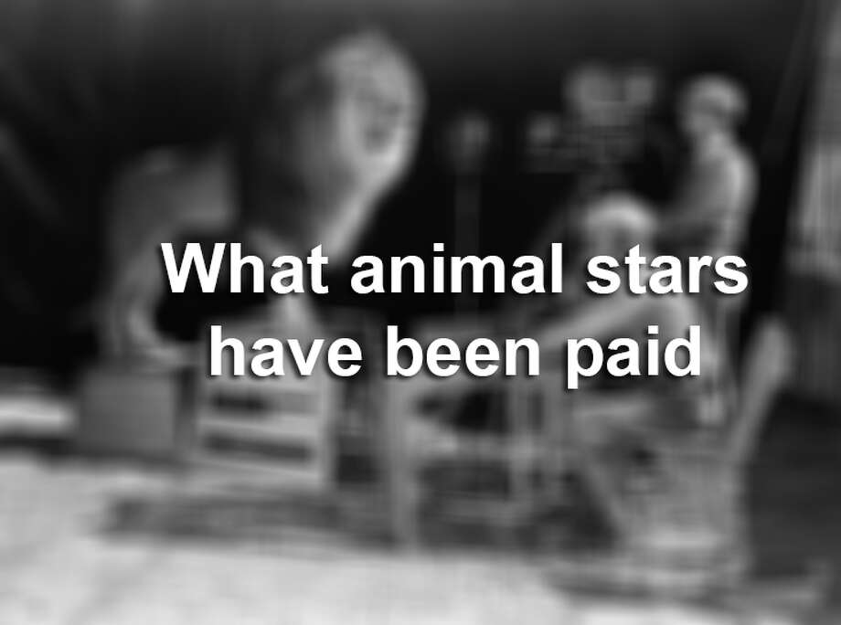 Take a look at what famous animals are paid for their labor. Photo: John Kobal Foundation