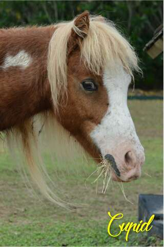 Dogs, ponies rescued from Grimes County now available for