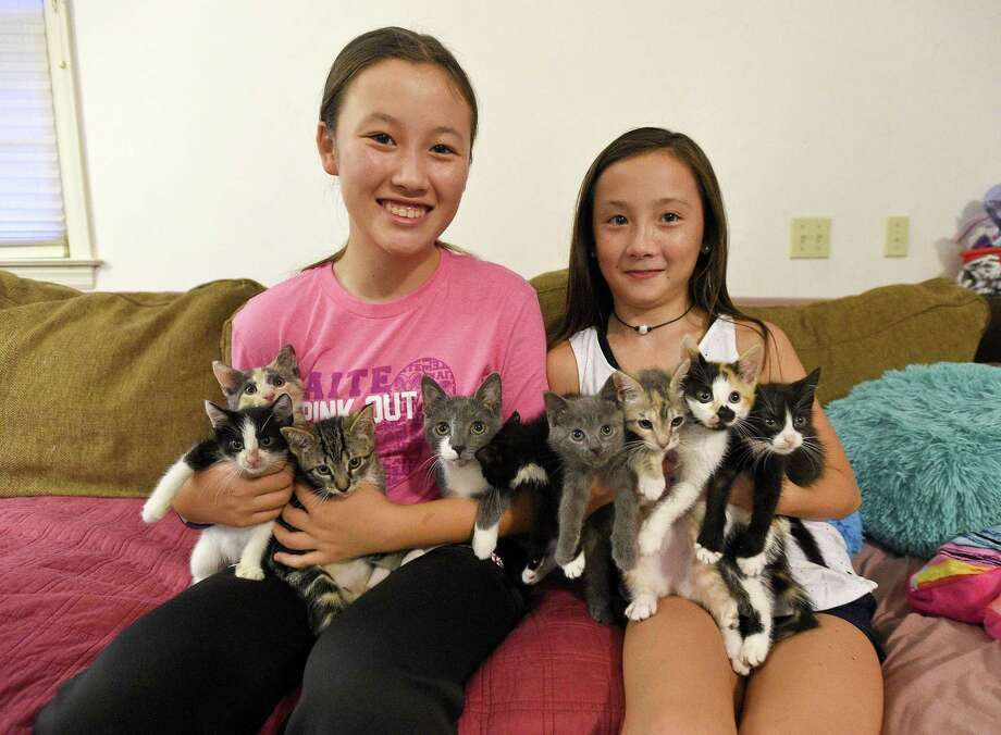 From left, Sydney Butler, 14, and her sister Meisha, 11, are photograph on Oct. 11, 2018 with a group of kittens they fostering at their home in Darien, Connecticut. The 4-males and 6-female eight week-old kittens were saved by Pitter Patter Feline Rescue, a Stamford group that traps and treats and neuters feral cats to reduce the exploding population and the animals' suffering. The grassroots group, which survives on a small state grant and the generosity of strangers, is having a fundraiser in Stamford on Oct. 16. Photo: Matthew Brown / Hearst Connecticut Media / Stamford Advocate