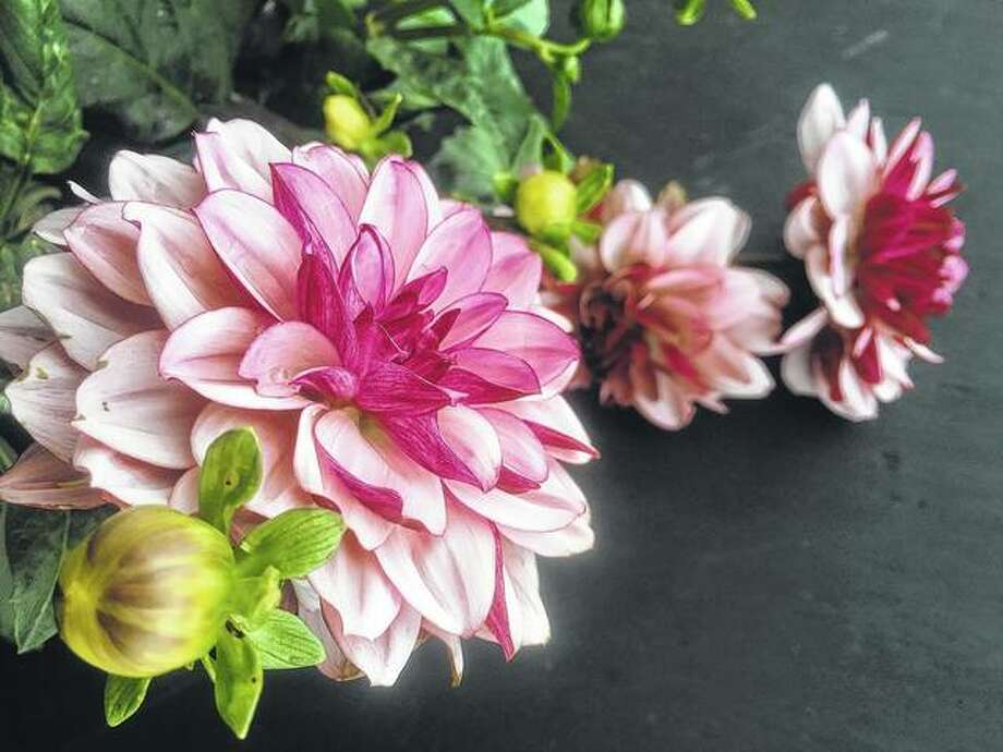 Purple dahlias add their own hues to the fall colorscape.