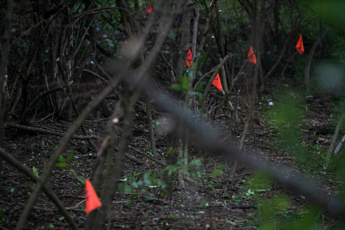 Orange flags mark potential grave in the Hockley Cemetery on San Antonio's Northeast Side, Saturday, Oct. 13, 2018. The San Antonio African American Community Archive and Museum organized the effort to clear decades of growth from the Hockley Cemetery is a lost African American graveyard from the 1800s and is located in between a subdivision and Northern Hills Elementary School.