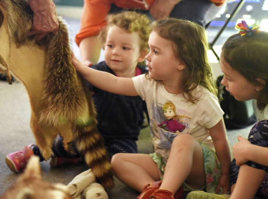 Meghan Devaney, 3, of Port Chester, N.Y., pets a racoonn's tail during the Bruce Beginnings program at the Bruce Museum in May. The program is for children ages 2.5 to 5 with an adult on Tuesdays — free admission day — at 11 a.m. and 1 p.m. at the museum. Explore its collections and exhibitions through picture books and hands-on activities. Space is limited. The theme this Tuesday will be Tool Time. Visit brucemuseum.org for more info. Photo: File / Tyler Sizemore / Hearst Connecticut Media / Greenwich Time