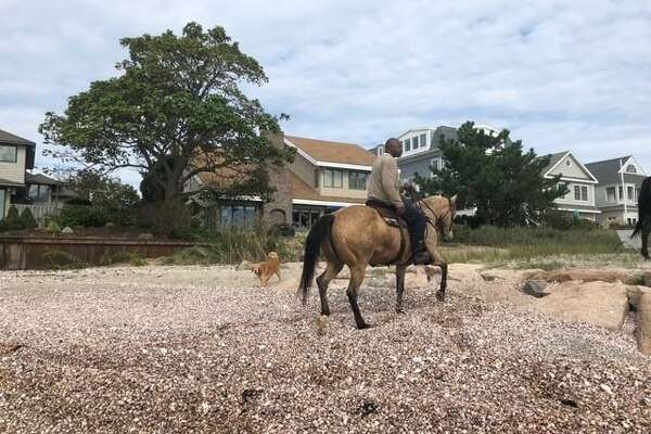 A horse died Sunday on a beach off of Fairfield Beach Road. Here, photos reportedly of the party involved.