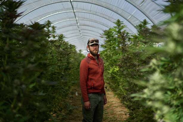 John De Friel, CEO of Raw Garden, at his cannabis farm in Buellton, Calif., this month. The farm sits among cabbage patches and wineries in Santa Barbara County, where agriculture is being reshaped by legalized marijuana.