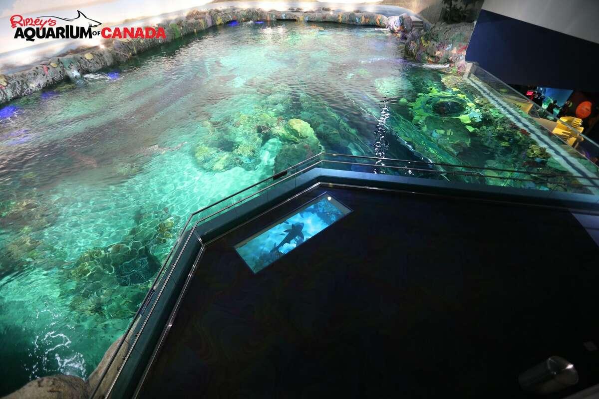 "FILE - The ""Dangerous Lagoon"" at Ripley's Aquarium of Canada in Toronto."