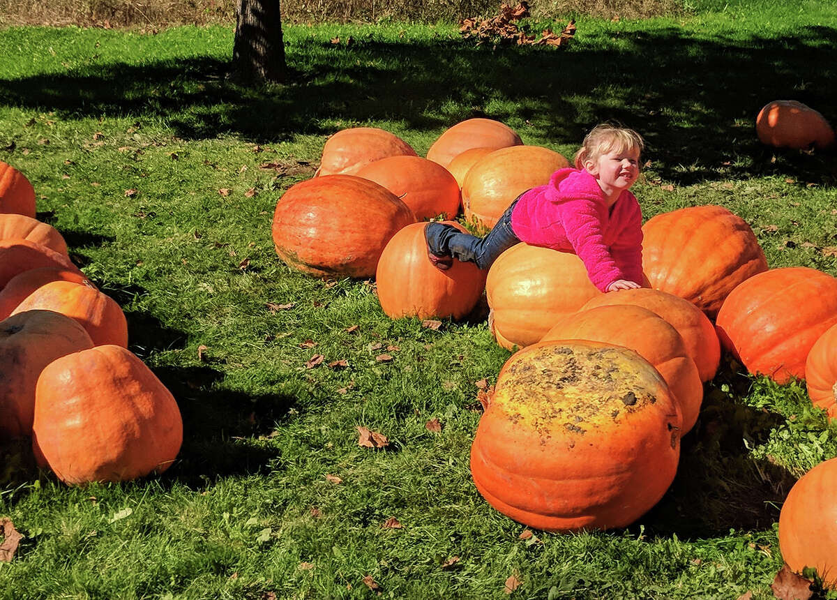 Alyssa Rozga, 3, of Harrison tests out which pumpkin she is getting from The Wild Pumpkin in Beaverton on Saturday, Oct. 13, 2018. Her parents Andrea Johnson and Jim Rozga loved all the events at the farm. (Tereasa Nims/for the Daily News)