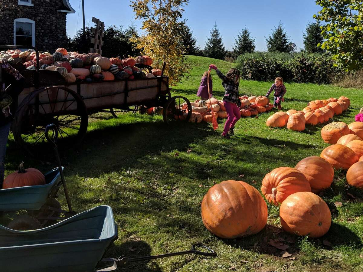 People flocked to The Wild Pumpkin in Beaverton Saturday, Oct. 13, 2018 for cider, donuts, pumpkin picking and to pet the many animals at the petting zoo. Fire ravaged one of the barns on Friday, Sept. 21, but the business is back in full swing. (Tereasa Nims/for the Daily News)