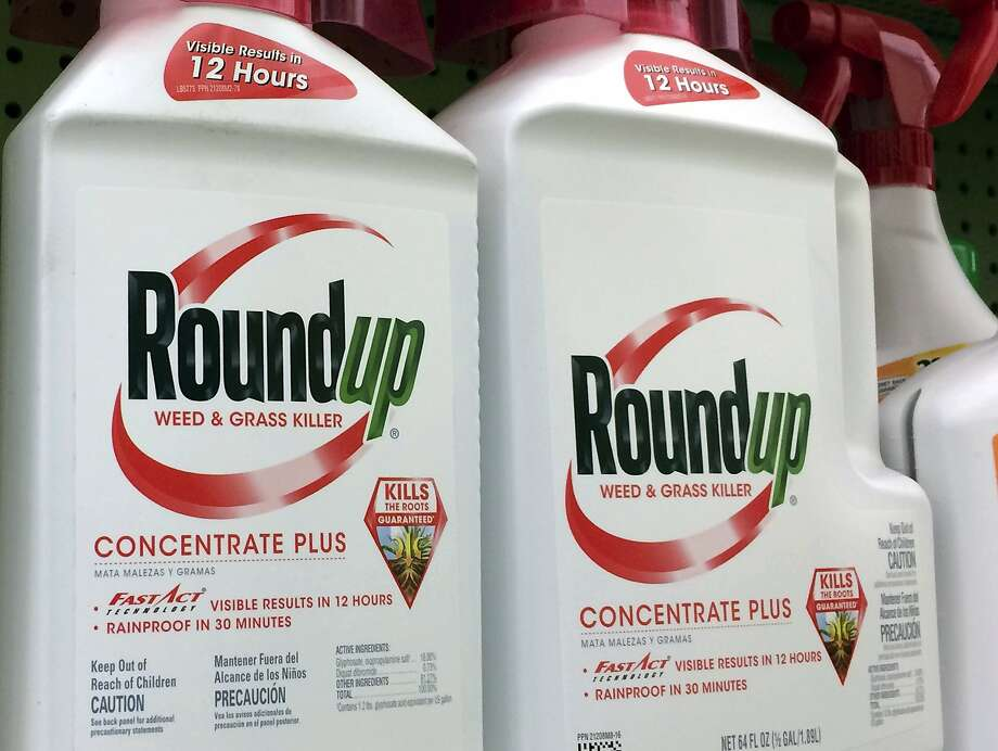 This Jan. 26, 2017, file photo shows containers of Roundup, a weed killer made by Monsanto, on a shelf at a hardware store in Los Angeles. Photo: Reed Saxon / Associated Press