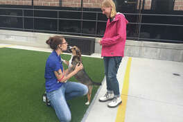 Hanna Markezich, Customer Service Lead, kisses a Kennelwood Pet Resort guest while Becca Soper, a DayCamp representative, looks on.