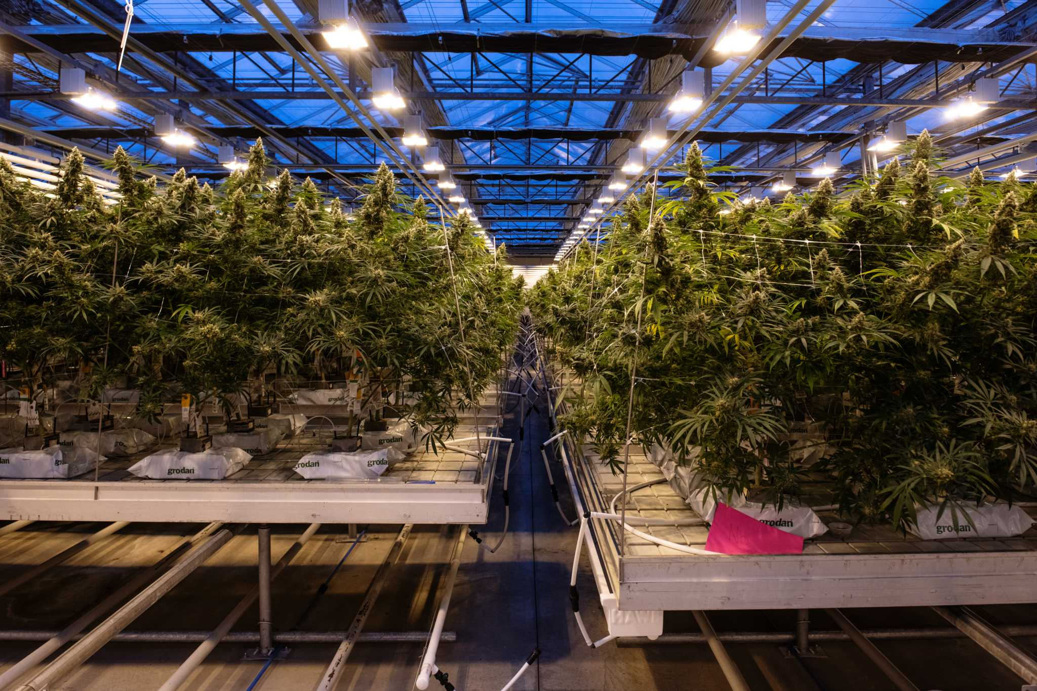 Marijuana becomes legal in Canada on Wednesday, but barriers remain ...