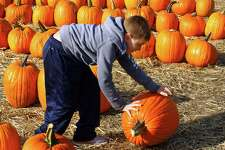 Ellis Hensel, 8, of Monroe, rolls a huge pumpkin to the nearby cart as he and the rest of his family spend time picking pumpkins at Jones Family Farms' Pumpkinseed Hill Farm in Shelton, Conn. on Tuesday October 16, 2018. The farm will be open daily from 10 a.m. to 5:30 p.m. Call the crop report at (203) 929-8425 for the farm and winery updates and for picking locations.