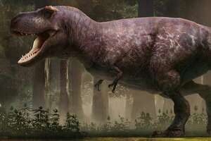 Bay Area-based concept artist RJ Palmer created what he believes to be the most scientifically accurate drawing of a T. rex.