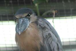 Connecticut?'s Beardsley Zoo is the new home for a pair of boat-billed herons, named in honor of Burt Reynolds and his longtime lady friend, Lonnie Anderson