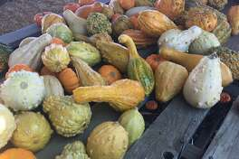 The Nicasio Valley Pumpkin Patch offers a reminder that the harvest season is a liminal time.