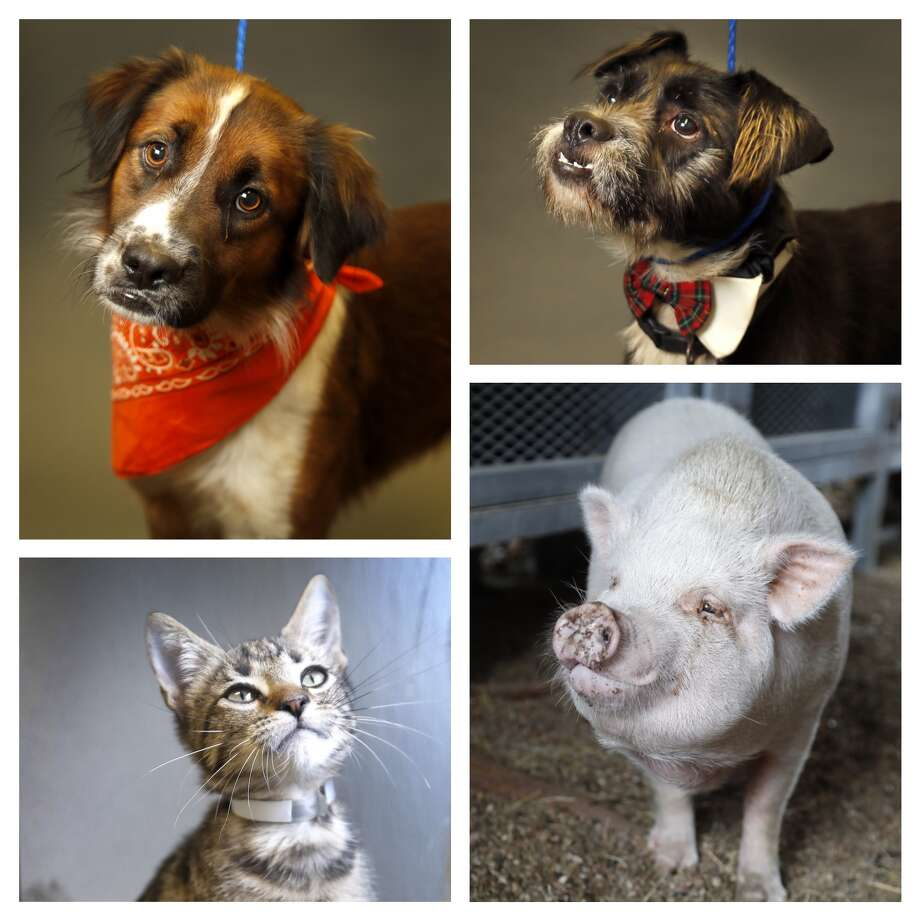 Pets: who got in the top 6 by the letter of the law