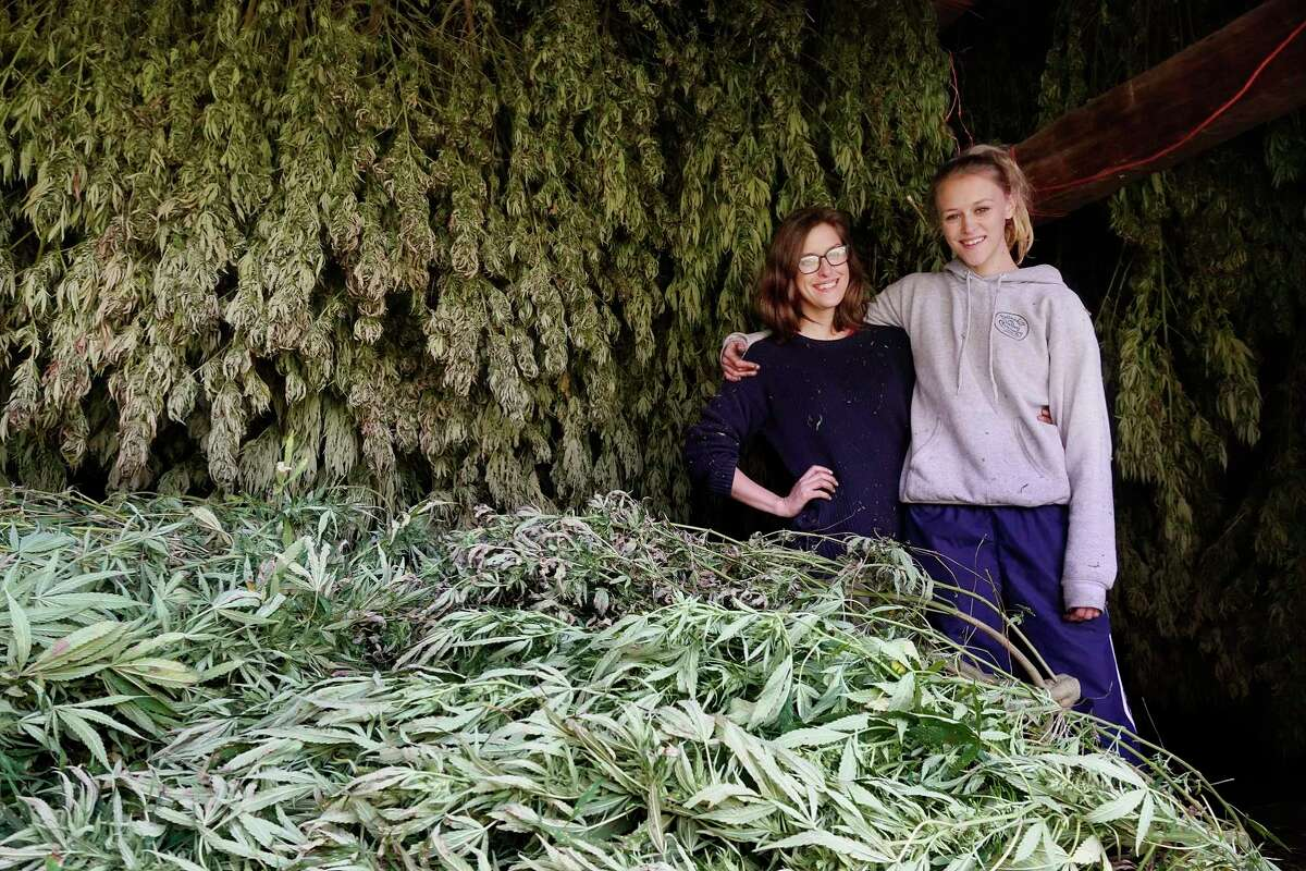 Sisters, Sarah Rogers Murphy, left, and Iris Rogers pose with some of the hemp plants that have been harvested on their farm on Tuesday, Oct. 16, 2018, in Hebron, N.Y. Some of the plants will be used for CBD oil. (Paul Buckowski/Times Union)