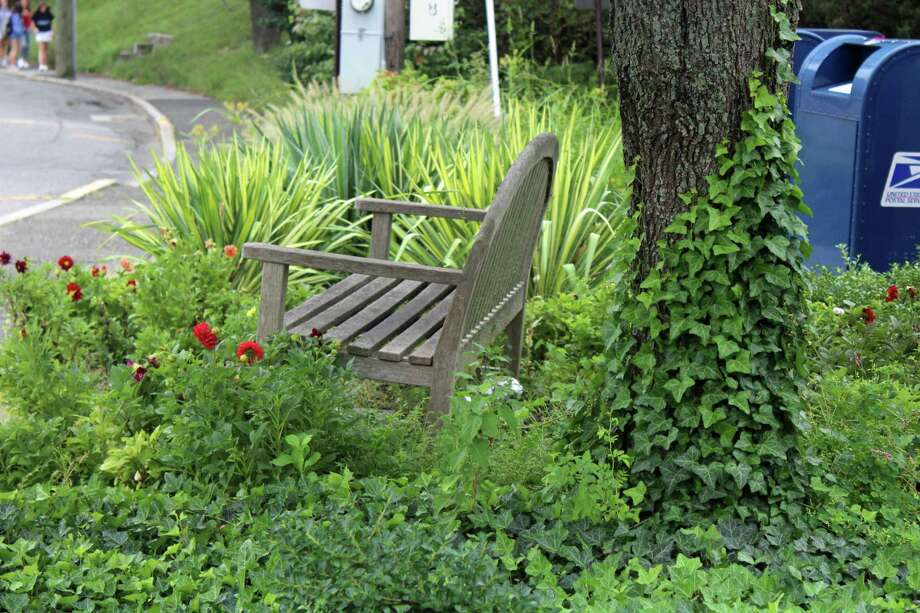 A bench on Pine Street is surrounded by lush greenery. Photo: Humberto J. Rocha / Hearst Connecticut Media / New Canaan News
