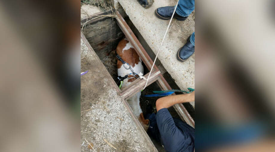 Houston firefighters rescue a pony stuck in a storm drain Wednesday, Oct. 17, 2018. Photo: Houston Fire Department