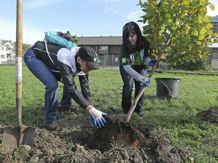 Now is a great time to plant shade trees.