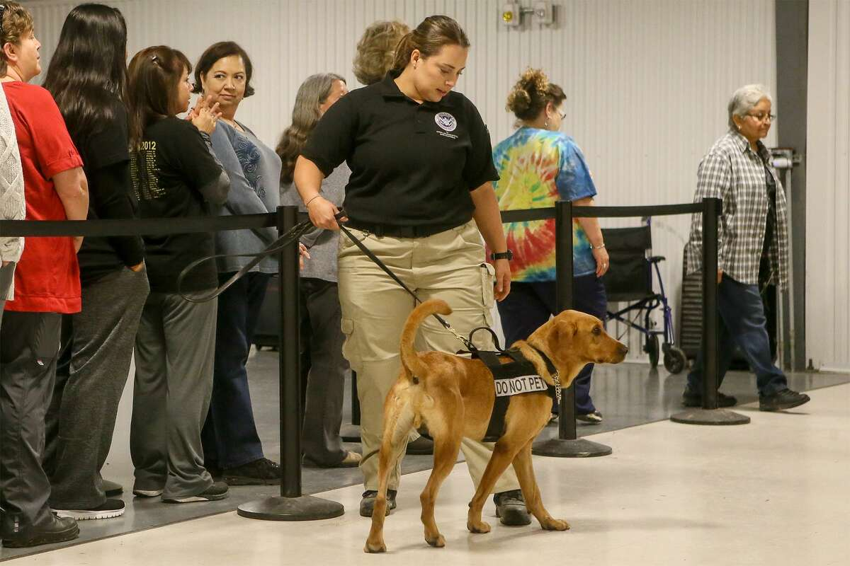 Trainer Nicole Osterman from San Juan, Puerto Rico works with Derby, a 2 1/2-year-old Labrador Retriever, in an airport mock checkpoint exercise during a behind-the-scenes look at the Transportation Security Administration's explosive-detection K9 training center at Lackland Air Force Base on Wednesday, Oct. 17, 2018.