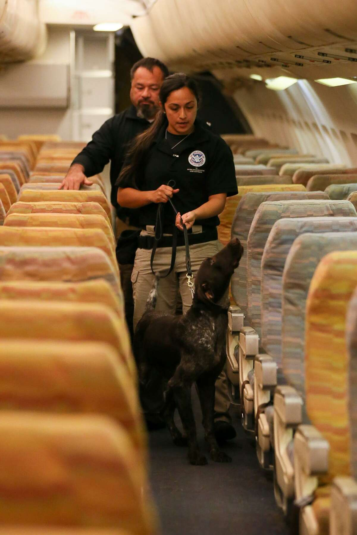 Raquel Granados from DFW searches for explosives with Szultan, a two-year-old German Shorthaired Pointer, in a wide aircraft exercise as the Transportation Security Administration gives a behind-the-scenes look at their explosive-detection K9 training center at Lackland Air Force Base on Wednesday, Oct. 17, 2018.