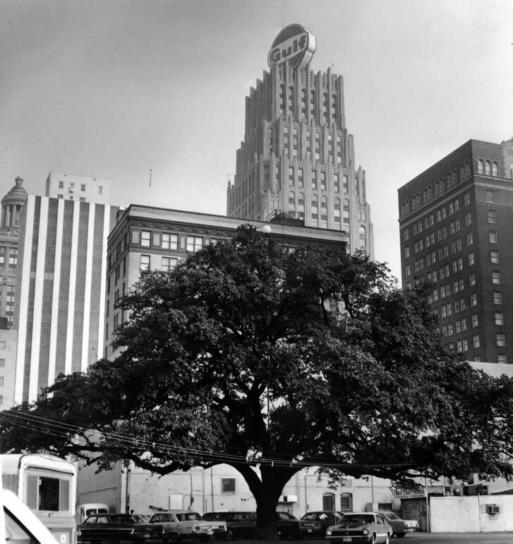 From the May 25, 1972, Chronicle: This stately live oak tree continues to grow on a parking lot on Rusk between Fannin and San Jacinto, impervious to the march of downtown construction. The tree was planted around 1900 by William D. Cleveland Jr., whose family lived on the site. Cleveland, a cotton merchant who died in 1958 at the age of 85, asked Houston Endowment, Inc., owners of the property, not to cut down the tree. An official said the tree would remain standing as long as the foundation owns the land.    The tree, which was next to the Melrose Building, is now gone.