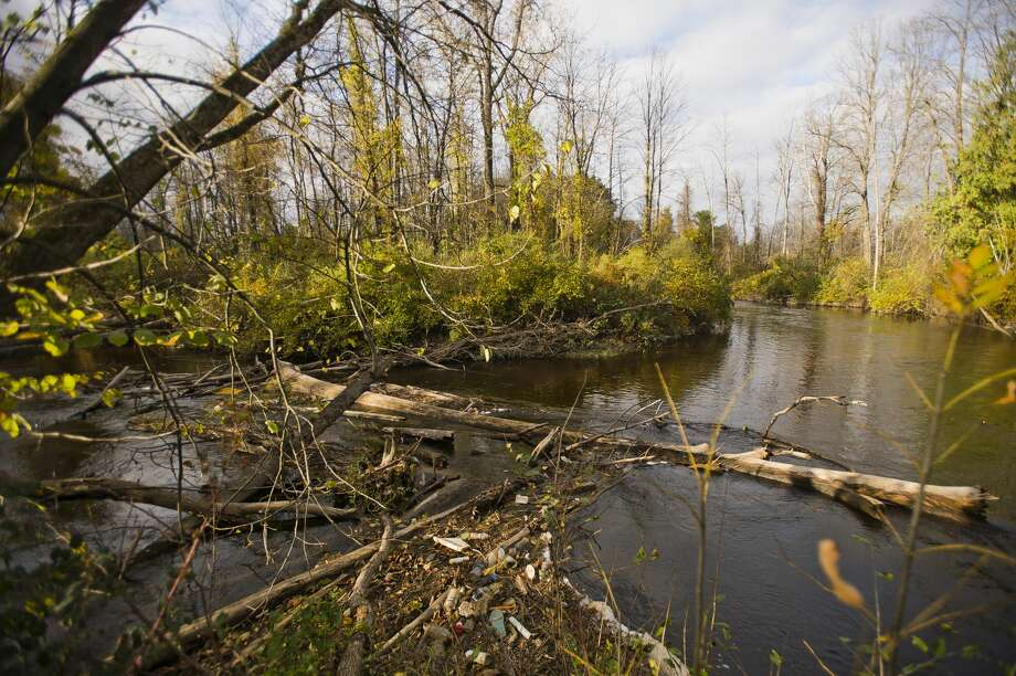 Logs span the width of the Cedar River near River Road in Gladwin on Wednesday, Oct. 17, 2018. (Katy Kildee/kkildee@mdn.net) Photo: (Katy Kildee/kkildee@mdn.net)