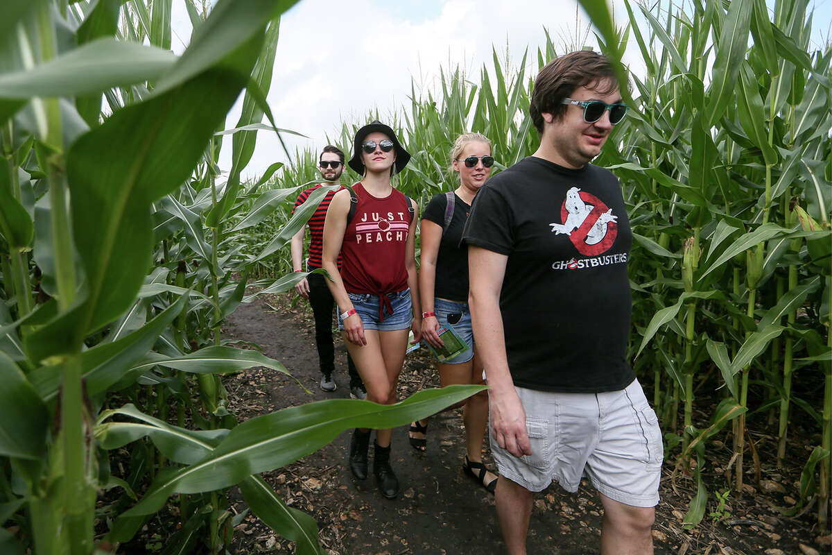 Ryan Irish (from right), Melissa Irish, Denise Stepp and Tom Troy navigate the trails in the Traders Village Corny Maze, the only one of its kind within the San Antonio City limits, on Sunday, Oct. 14, 2018. The maze covers ten acres adjacent to Traders Village at 9333 S.W. Loop 410 and also features a pumpkin patch and a petting zoo.