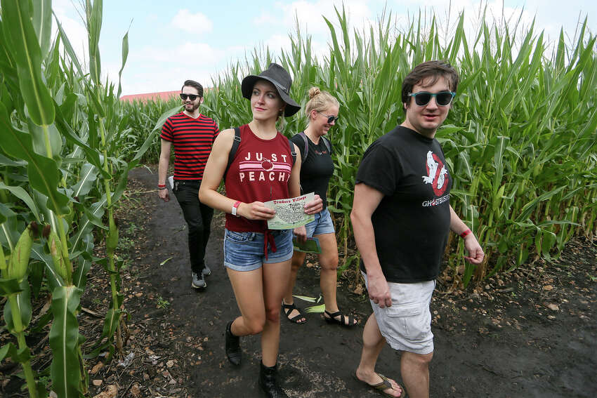 Buttonwood Farm in Griswold Corn maze open through October 27 Find out more