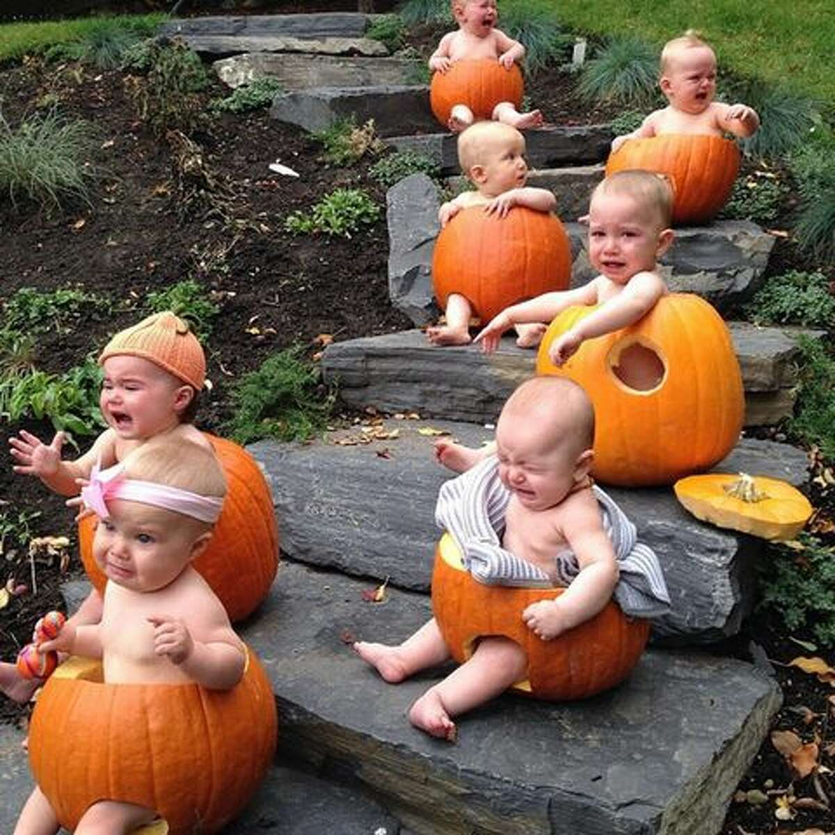 Lesson No. 1: Halloween is not an excuse to torture babies by turning them into pumpkins. Sorry, but ... babies are not your decorations. Babies everywhere are shaking their heads, saying,