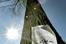 New Haven, Connecticut - Wednesday, October 17, 2018: A dead White Ash tree on East Rock Road in New Haven, killed by the Emerald Ash Borer beetle, scheduled for tree removal by the City of New Haven. The Emerald Ash Borer beetle is killing all the North American species of Ash trees.