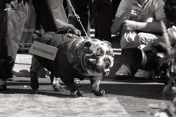 Itu0027s Halloween; Hereu0027s A Dog Costume Contest From 1985