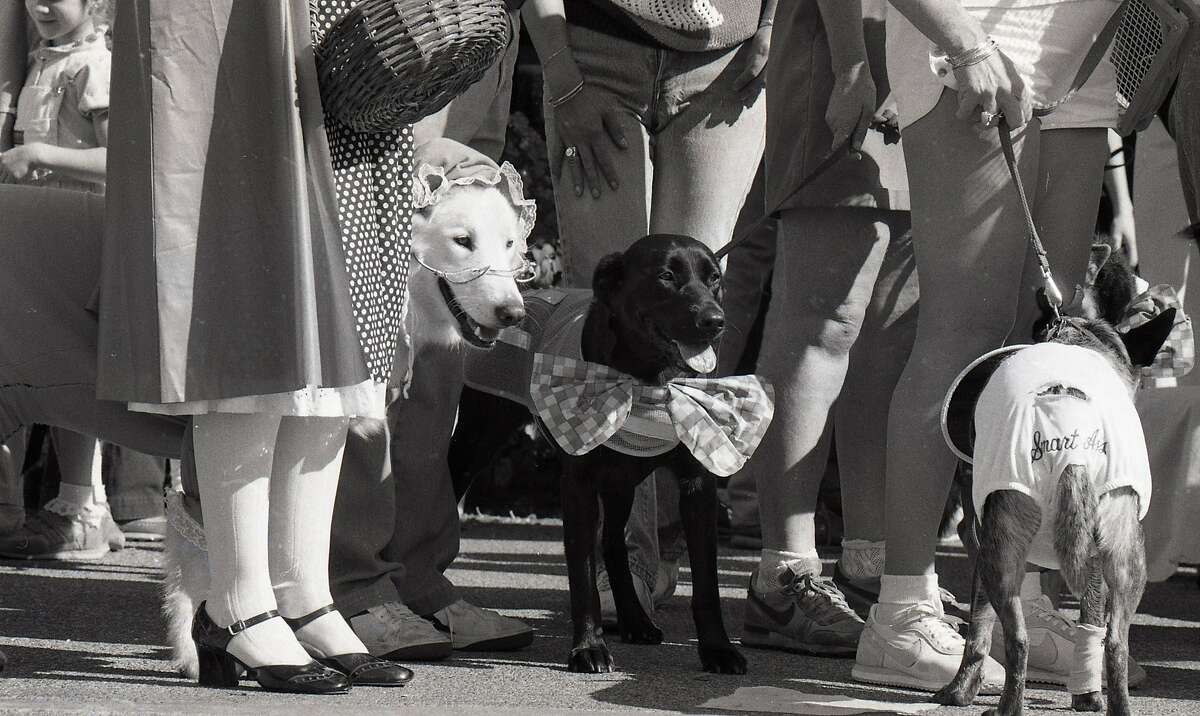 A dog Halloween party for Paws shop in Larkspur Landing shopping center, October 27, 1985