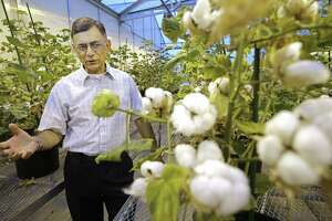 Keerti S. Rathore, lead researcher with the Institute for Plant Genomics and Biotechnology at Texas A&M AgriLife, talks about how the protein in cottonseed could help feed the world. Research began in the 1990s to expand the seed's use beyond cattle feed.