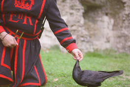 Ravenmaster Christopher Skaife is charged with caring for the ravens that reside at the Tower of London.